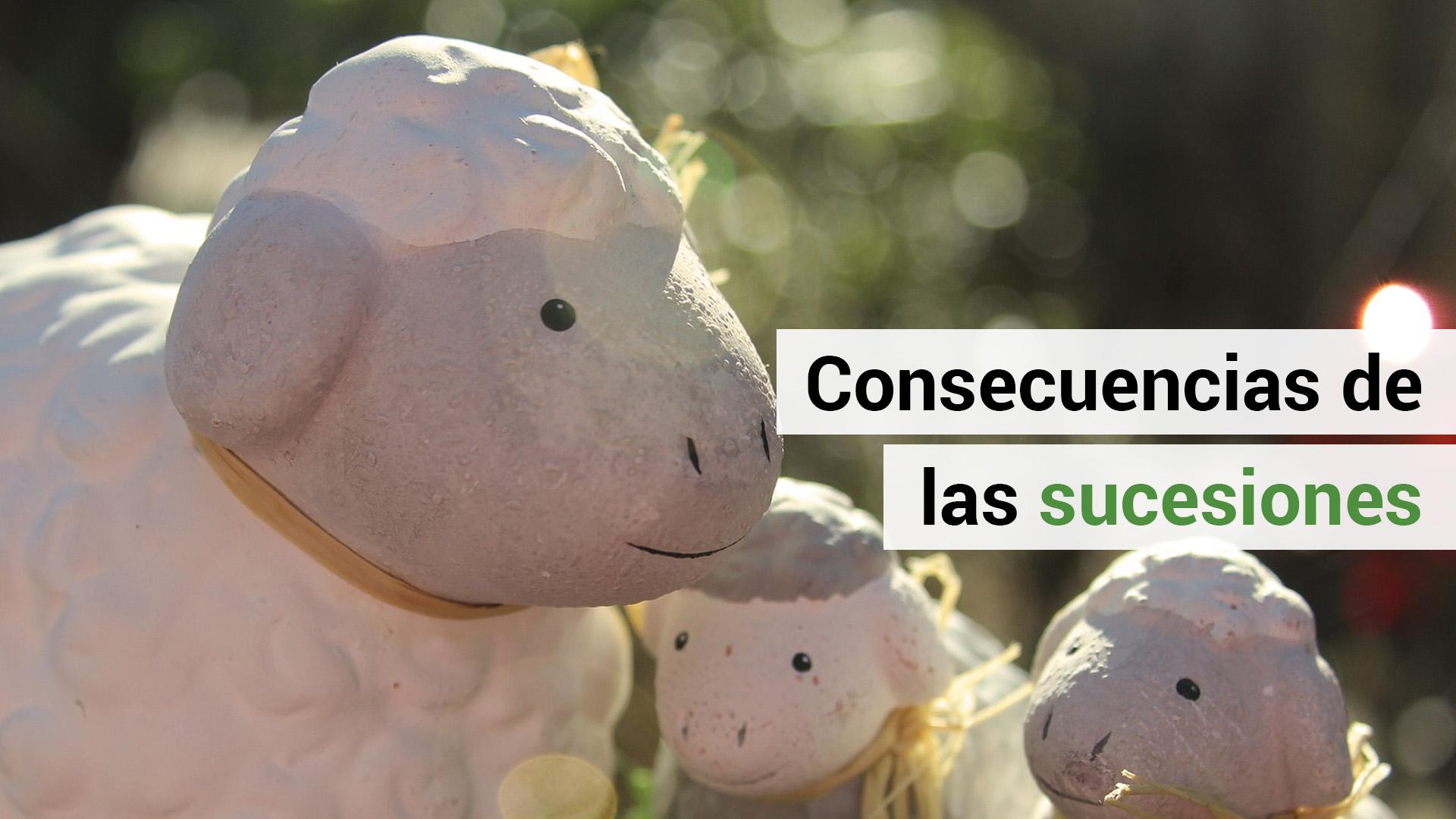 ¿Conoces las consecuencias de la sucesión de empresas?